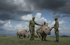 rhino-hero