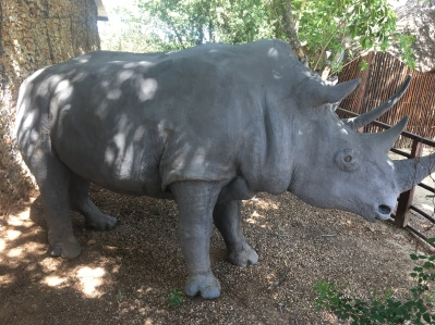 addo-rhino